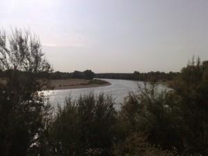 Meandro en la margen izquierda por el Soto de Benedicto